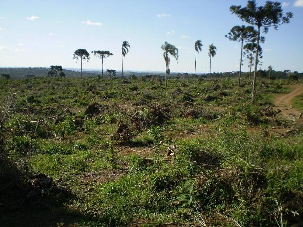 Polícia Ambiental encaminhou informações para o Ministério Público do Paraná (Foto: Divulgação)