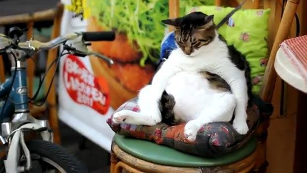 Gato tirando soneca atraiu curiosos no Japão. (Foto: Reprodução)