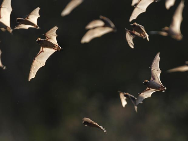 morcegos (Foto: Eric Gay/AP)