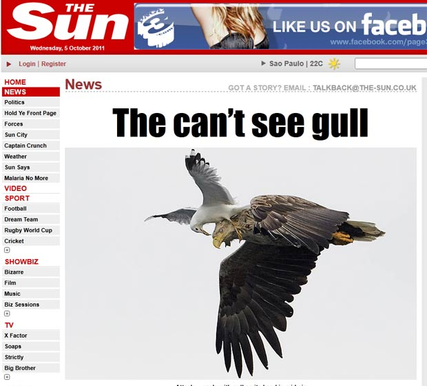 Markus Varesvuo flagrou uma gaivota atacando uma águia em pleno voo (Foto: Reprodução/The Sun)