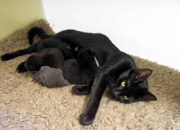 A gata Jolie e sua ninhada (Foto: PA/RSPCA)