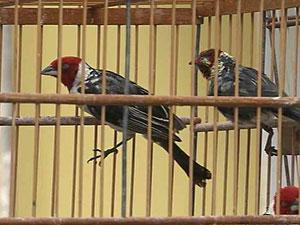 Aves apreendidas pela PM no Recife (Fot Reprodução/Globo Nordeste)