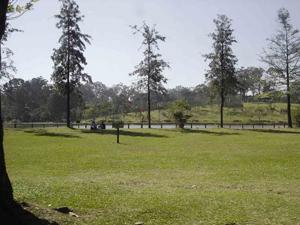 parque_carmo (Foto: Divulgação/SVMA)