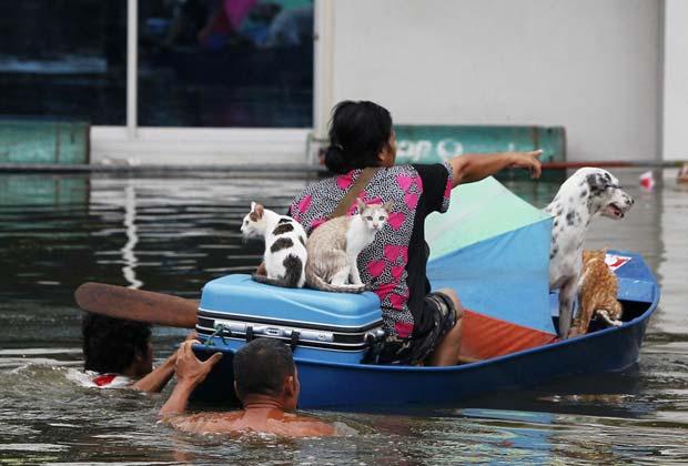 Moradores, gatos e cães são retirados de área alagada na província tailandesa de Ayutthaya. Equipes de resgate lutavam nesta segunda-feira (10) para evitar um desastre humanitário na região, que tem centenas de moradores isolados pelas enchentes (Foto: Reuters)