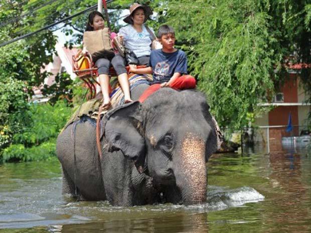 Moradores usam elefante para deixar área atingida. Cerca de 270 pessoas morreram em enchentes e inundações no país desde julho em 30 das 77 províncias tailandesas. Mais de 700 mil casas foram destruídas ou danificadas (Foto: AFP)