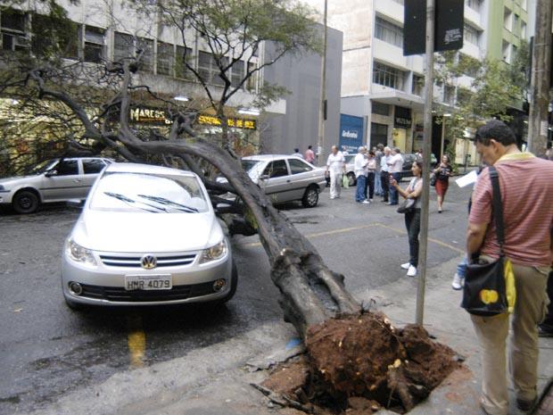 Árvore caiu sobre três carros na rua Goitacazes, no centro de Belo Horizonte (MG) (Foto: Marcos Evangelista/O Tempo/AE)
