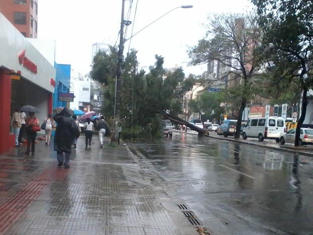Árvore cai na Avenida do Contorno, na região da Savassi (Foto: Luana Basques Romão/VC no G1)
