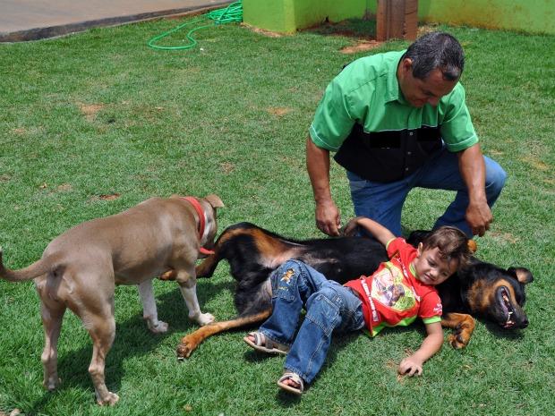 Pai ensina filho a interagir com pit bulls (Foto: Hélder Rafael/G1 MS)