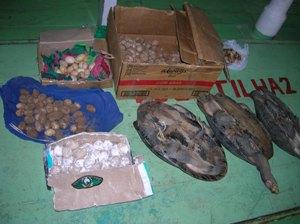Quelônios e ovos estavam escondidos em caixas (Foto: Divulgação/Polícia Ambiental)