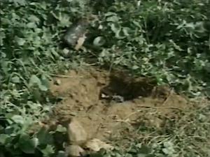 Terreno onde o recém-nascido foi enterrado em Catolé do Rocha, PB (Foto: Reprodução/TV Paraíba)