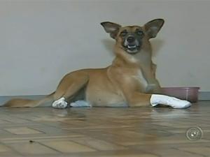Já há interessados em adotar a cadela Júlia (Foto: Reprodução/TV Tem)