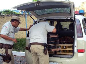 Mais de 200 pássaros silvestres são apreendidos na Bahia (Foto: Divulgação/ Polícia)