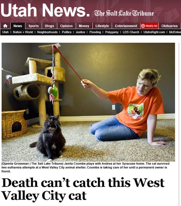Gata chamada 'Andrea' sobreviveu a duas tentativas de eutanásia. (Foto: Reprodução)