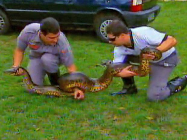 Cobra foi capturada pelos bombeiros (Foto: Reprodução/EPTV)