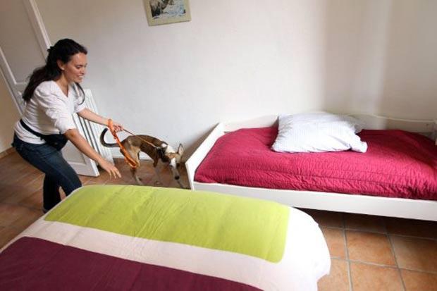 Cão foi utilizado para detectar a presença de percevejos em um apartamento em Nice. (Foto: Valery Hache/AFP)