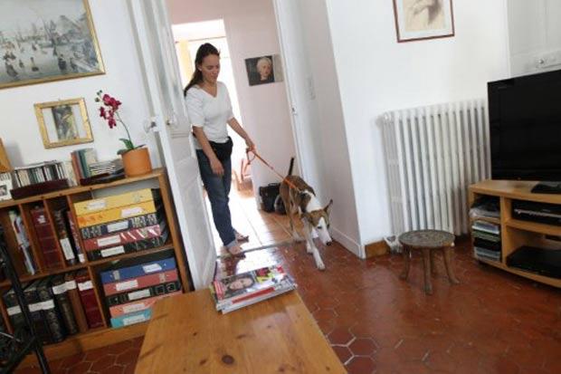 Franceses estão usando cães importados dos EUA para farejar a presença de percevejos. (Foto: Valery Hache/AFP)