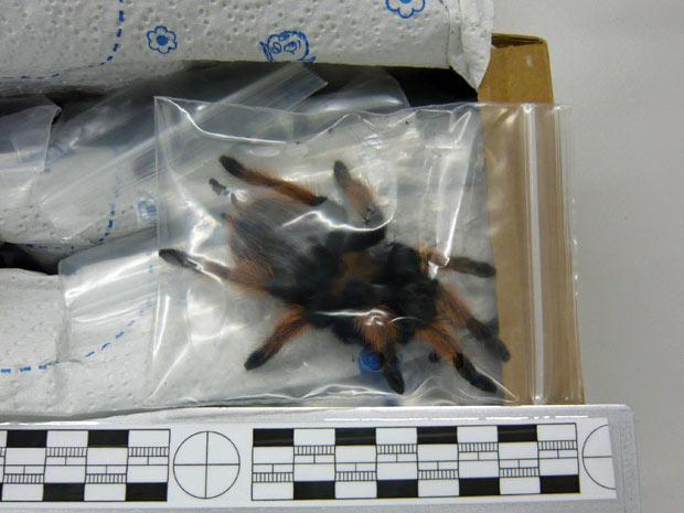 Tarantulas 2 (Foto: AP)
