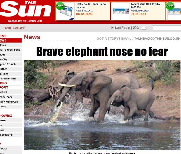 Crocodilo mordeu tromba de elefanta enquanto ela tomava água. (Foto: Reprodução/The Sun)