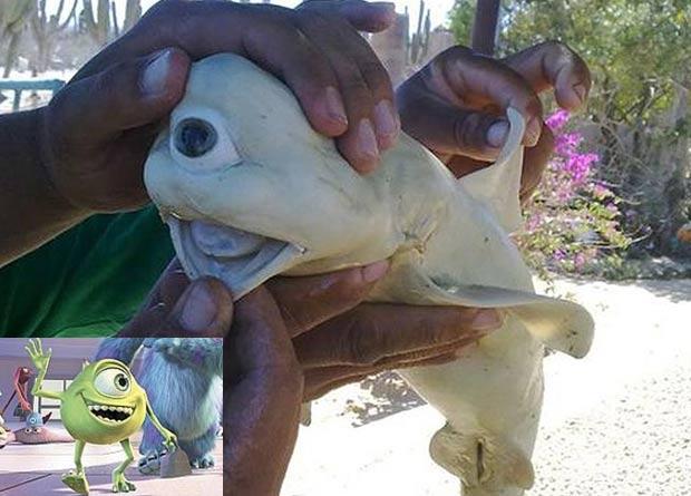 Filhote de tubarão lembra personagem Mike, da animação 'Monstros S/A'. (Foto: Reprodução)