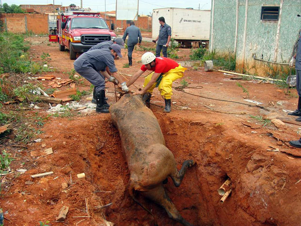 Oito militares e dois carros se empanharam na missão. Após o resgate, o animal foi entregue ao propietário  (Foto: Divulgação / Corpo de Bombeiros)