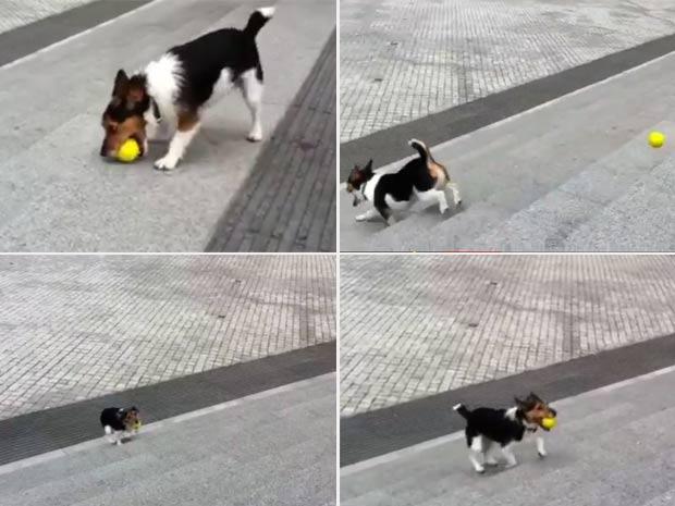 Cão faz sucesso em vídeo ao jogar e ir buscar bola em escada. (Foto: Reprodução/YouTube)