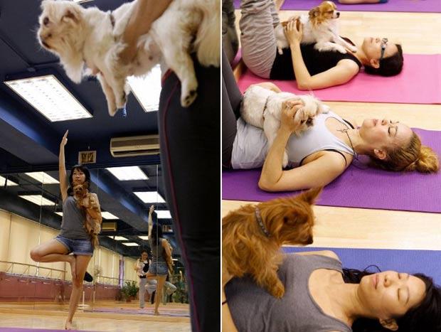 Cães não parecem muito concentrados na aula de ioga canina. (Foto: Dale de la Rey/AFP)