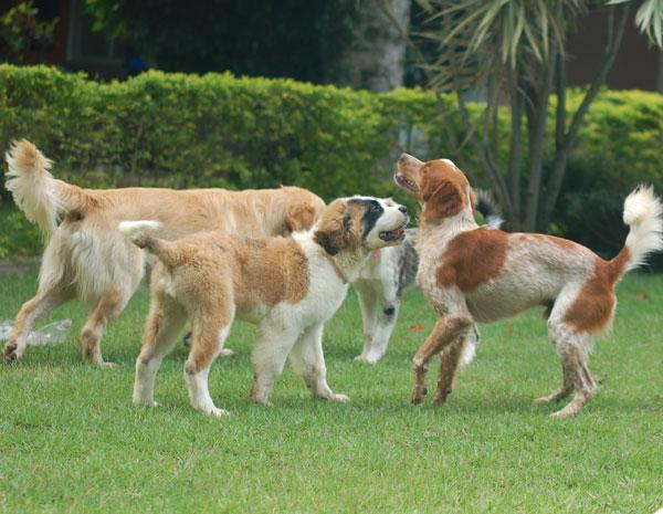 Casa do Simbad recebe cachorros para creche e para hospedagem (Foto: Divulgação/Casa do SImbad)