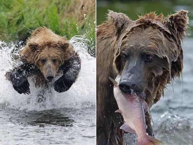 urso (Foto: Charles Glatzer / BMUSA / Getty Images)