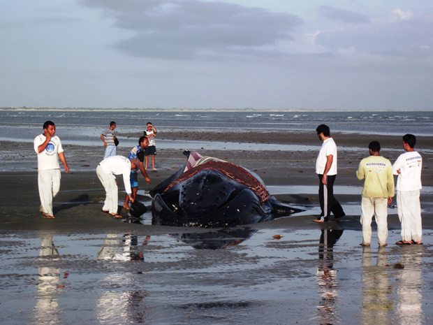 baleia-jubarte em RN (Foto: Carlos Júnior/ VC no G1)