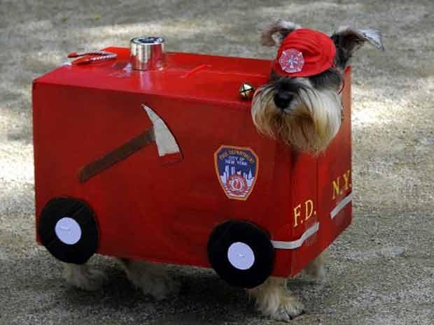 Cão aparece fantasiado de carro de bombeiros em festa na Tompkins Square, em Nova York, neste sábado (22), em 'preparação para o Halloween, celebrado em 31 de outubro (Foto: AFP)