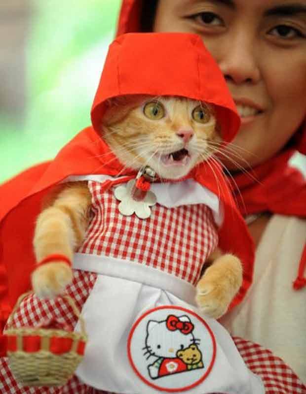Em outra festa, da sociedade protetora dos animais de Manila, nas Filipinas, a gatinha Rue foi de Chapeuzinho Vermelho, com um toque de 'Hello Kitty' (Foto: AFP)