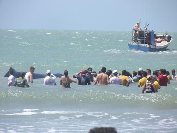 Baleia resgatada (Foto: Carlos Júnior/VC no G1)