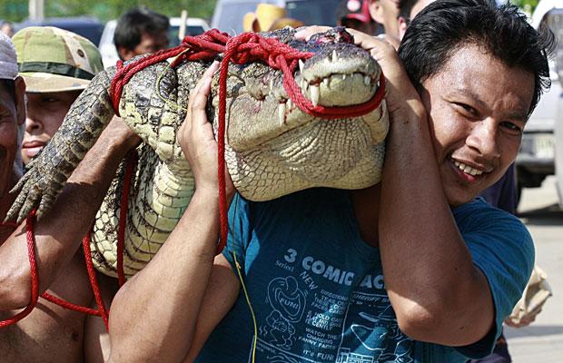 crocodilo (Foto: Apichart Weerawong/AP)