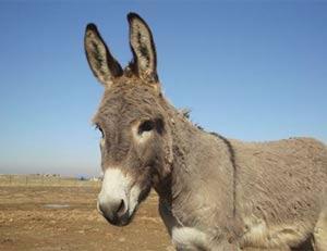 Zimbabuano alega que prostituta virou burro. (Foto: Reuters)