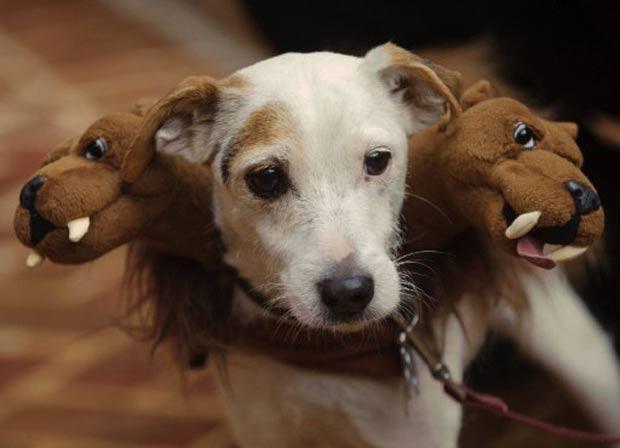 Cão ganhou fantasia inspirada em 'Cerberus', cão de três cabeças da mitologia grega. (Foto: Mandel Ngan/AFP)