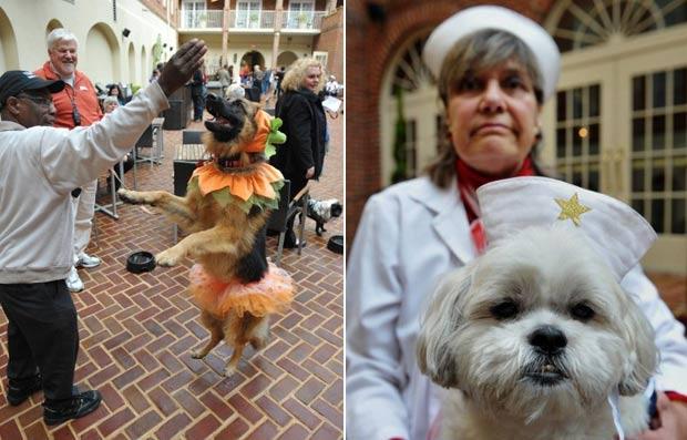 Á direita, Linda Greenway com sua cadela de estimação fantasiada de enfermeira. À esquerda, cadela ganhou fantasia de abóbora. (Foto: Mandel Ngan/AFP)