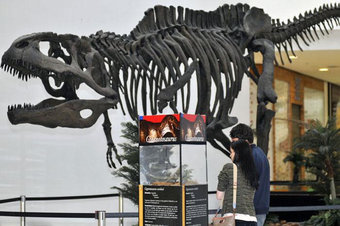 Exposição de dinossauros (Foto: Divulgação)