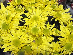 Comércio de flores e velas crescem no dia de finados (Foto: Denise Soares / G1)