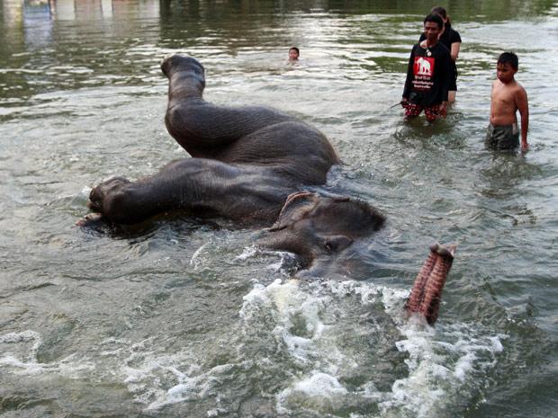 Elefante brinca em água de enchente na província de XXX (Foto: AP)
