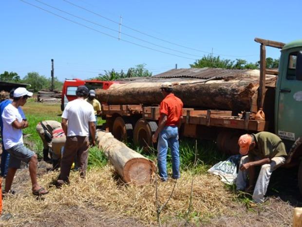 Tora de Madeira cai e atinge trabalhador no tórax, em Caarapó (Foto: André Nezzi/CaarapoNews)