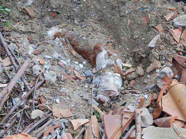 O cão Jerry, enterrado pelo próprio dono, em foto da polícia (Foto: Reprodução)