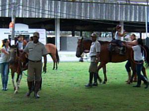 Festival do Cavalo começa esta sexta no Parque de Exposições de Salvador  (Foto: Reprodução/ TVBA)
