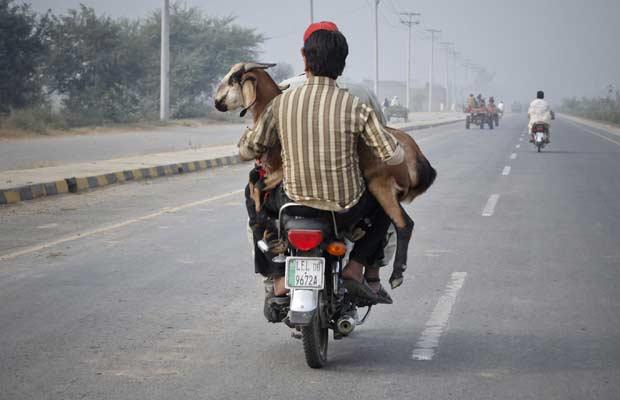 Homem levam caprino em moto em Lahore, no Paquistão, nesta sexta-feira (4) (Foto: Mohsin Raza/Reuters)