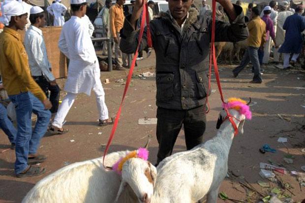 Os fiéis comemoram esta importante celebração religiosa sacrificando cabras, camelos ou bodes. A Índia tem a segunda maior população de seguidores do Islã no mundo, com mais de 150 milhões de pessoas. (Foto: AFP)