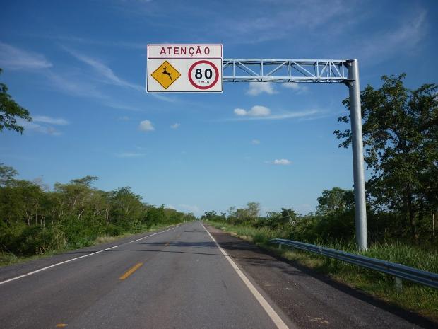Placa de sinalização alerta quanto ao perigo de animais atravessaram a pista da rodovia (Foto: Ronaldo Balla/TV Morena)