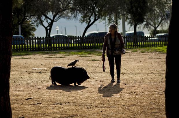 Nieves Morodo passeia em um parque com seu porco e um papagaio de estimação (Foto: Emilio Morenatti/AP)