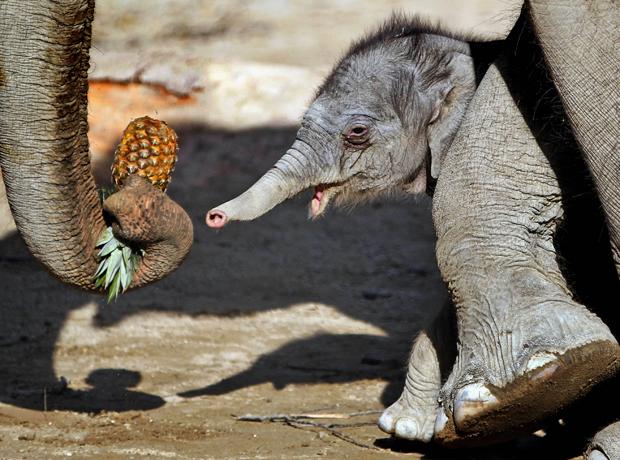 Foi a primeira aparição em público do filhote, que ainda não recebeu nome. (Foto: Matthias Schrader/AP)