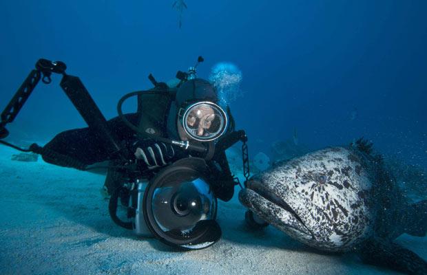 Fotógrafo desafia perigo registrando predadores aquáticos (Foto: David Doubilet/Nat Geo Stock/Caters)
