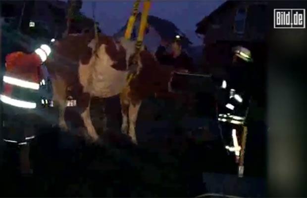Bombeiros usaram trator para resgatar o bovino. (Foto: Reprodução/Bild)