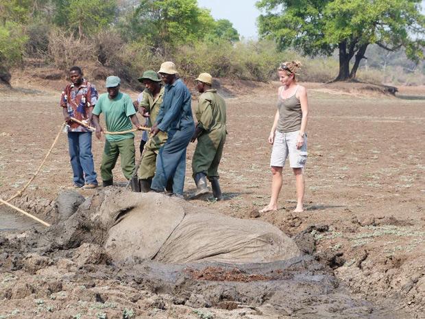 Equipe resgata os dois animais presos. (Foto: Abraham Banda / Norman Carr Safaris)